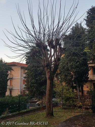 Cesena, 30 novembre 2017