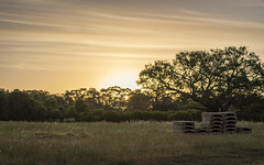 Along The Way (SteveKPhotography) Tags: sony stevekphotography alpha a99ii ilca99m2 sal70400g2 sunset clouds scenery scenic landscape goldenhour trees countryside nature outdoors canningriver westernaustralia
