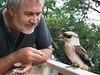 Feeding Kookaburra (Petra Ries Images) Tags: bird kookaburra lachenderhans kingfisher feeding füttern vogel eisvogel