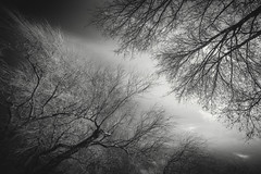 Encounters (RobertFenyo) Tags: blackandwhite blackwhite tree trees clouds nature