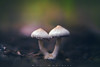Siamesas (www.studio360fotografia.es) Tags: setas pinardelrey olympus omd em10 mushroom zuiko 45mm 18 bokeh desenfoque colors colores fantasia fantasy macro