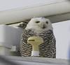 Which way Captain? (raytlake) Tags: owl snowy ship garmin navigation gps