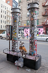 Hudson. Out and about over near Little Italy, NYC... (James and Karla Murray Photography) Tags: pitbull