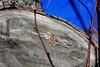 Cercles de vie (ZUHMHA) Tags: bulgarie bulgaria hiver winter shipka tronc bois wood nature macro matière texture line lignes courbes curve geometry géométrie sky ciel blue bleu color couleur