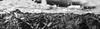 Widdersteinpanorama (McMac70) Tags: berge blackandwhite jahreszeiten kleinwalsertal landschaft mountains mountainscape natur nature outdoor panorama pentaxk3 pflanze plant schnee schwarzweis tree walmendingerhorn widderstein winter alps cloud covered flora forest hill land landscape large monochrome monochromephotography mountain mountainrange mountainouslandforms noperson outdoors panoramic photo photography rock sky smcpentaxda18135mmf3556edalifdcwr snow travel