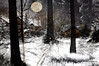 WELCOME WINTER 2018. (Viktor Manuel 990.) Tags: forest woods trees snow winter2018 invierno2018 moon luna wintercomposition composicióninvernal digitalart artedigital monochrome monocromo