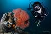 R E D (Randi Ang) Tags: gili meno gilimeno giliislands islands island lombok indonesia underwater scuba diving dive photography wide angle randi ang canon eos 6d fisheye 15mm randiang