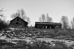 OldSheds18-3-8 (alethia_dahlin) Tags: barn shed field bw monochrome eagle idaho
