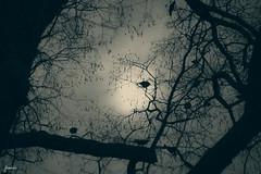 Mirror Neurons in Birds (sebajimenezphoto) Tags: travelny nuevayork vacaciones ny