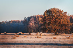 Before Sunrise (Niks Freimanis) Tags: cold winter auksts frozen frost sunrise sun saullēkts trees meadow forest woods october november autumn ziema rudens early morning agrs rits canon 70d 70200 f4 l blue soft landscape nature latvia latvija baltic