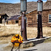 California Bodie Shell Station