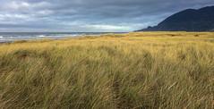 The Dunes (LBofcourse) Tags: nehalemoregon manzanita