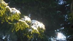 Looking  UP at Winter (claire artistandpoet Stroke Survivor) Tags: winter snow