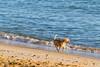 Cão | Praia do Forte | Bahia | Brasil (Leandro Rinco) Tags: brazil brasil praiadoforte bahia beach praia mar ocean sol tartaruga projetotamar sun dog cao