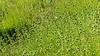 Flora Silvestre (LeonCalquin (2)) Tags: flores silvestres wild flowers leon calquin fotos photos vincent carolina marcelo videos santiago chile flickr quincal huine huiñe aquelarre lago vichuquen diseño catalog catalogo senderismo hiking travel viaje nature endemica flora nativa naturaleza chilena chilenas especie especies nativas endemicas