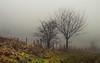 The Winter Fence (Netsrak) Tags: baum bã¤ume eu europa europe forst januar january landschaft natur nebel wald fog forest landscape mist nature tree trees winter woods