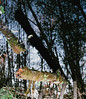 transposed (losthalo) Tags: wetland trees forest water reflection inversion itsnotacapture pentaxart smcpm50mmf14 fuji superia