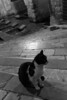 Medieval Cat (faster3ck) Tags: street monochrome people portrait cat ilovemycat catstagram kitten pavement urban architecture wall stone mammal old city outdoors shadow family stairs medieval history cefalù bw travel traveling visiting