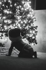 Santa Baby (tiana_janelle) Tags: eyecandyholidaychallenge christmas newbornphotography