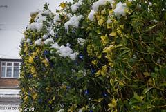 Snow & Lights (M C Smith) Tags: bush snow pentax k3 road slush house yellow green blue red lights christmas sky grey aerial