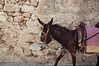 Lindos Donkey (SamsPhoto's) Tags: photo photography sam rizzo diary nikon nikkor 35mm 50mm lens camera flickr candid d90 pic pics photograph colour samrizzo samrizzophoto uk photos photographs bournemouth poole dorset news