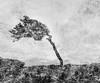 Acceptance (Peter & Olga) Tags: 2017 d810 easternsuburbs ian october olgabaldock clouds light multipleexposure shoot sunrise tree