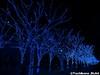 aonodokutsu006 (et_dslr_photo) Tags: xmas illumination 青の洞窟 shibuya yoyogi blueled night nightview nightshot hdr