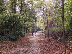 LR London 2017-300162 (hunbille) Tags: birgittelondonoktober20172lr london england nunhead cemetery magnificentseven magnificent seven victorian autumn fall allsaintscemetery all saints path challengeyouwinner