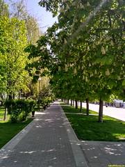 Цветут каштаны и в парке ни души..