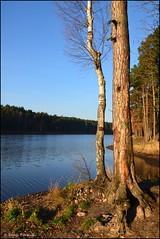DSC_7019 (facebook.com/DorotaOstrowskaFoto) Tags: rejów skarżyskokamienna zalew zalewrejowski plaża drzewa woda świętokrzyskie poland spacer
