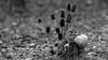 _I5U2926 (carlo612001) Tags: blackandwhite tit tits blackcappedtit black white nature wildlife friends wood yourbestoftoday