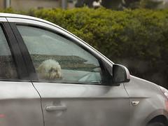 (Irith Gubi) Tags: winter telaviv israel dog rain