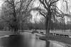 Bäume und Bänke (zora_schaf) Tags: englischergarten münchen munich schwarzweiss blackandwhite bäume bänke isar zoraschaf