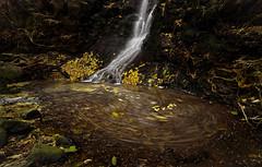 Wairuru Falls (Jaims Gibson) Tags: cascade waterfall hinewai httpswwwjamesgibsonphotographycom water le bankspeninsula tse tiltshift