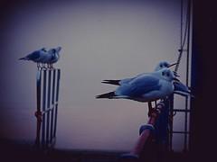 Ascona, debarcadero (sandropauli) Tags: ascona debarcadero autunno automne tessin ticino switzerland suisse schweiz svizzera theperfectphotographer mywinners myswitzerland mybest sandropauli