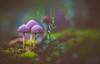 Mushroom family (Dhina A) Tags: sony a7rii ilce7rm2 a7r2 kaleinar mc 100mm f28 kaleinar100mmf28 5n m42 nikonf russian ussr soviet 6blades mushroom family