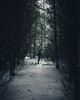 Lonely (Kevin Kistermann) Tags: grã¼n white weis snow schnee eifel eifelexplorers winter wald wood wildness