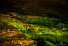 Green and Gold (ProPeak Photography) Tags: america beach california cave cliff coast ellenbrowningscrippspark famousplace green lajolla landscape moss northamerica orange places rocks sandiego touristattraction traveldestination travelandtourism usa unitedstates winter