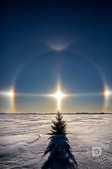 Solitary Tree & Sun Dogs # 387 (DBruner240) Tags: sundogs sun dogs winter nd north dakota ngc national geographic snow grand forks tree evergreen