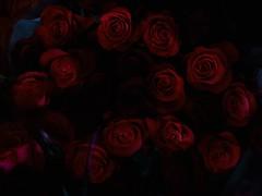 Deep in the Red (poem below) (Robert Cowlishaw (Mertonian)) Tags: mystery deep dark deepinthered canonpowershotg1xmarkiii markiii g1x powershot canon robertcowlishaw mertonian beauty wonder awe beautiful ineffable blossoms petals deepseeksdeep passionate downlooking