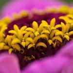 The joy of colour (Explored) thumbnail