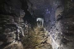 Anglų lietuvių žodynas. Žodis cave bat reiškia šikšnosparnių urvas lietuviškai.