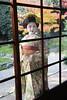 Maiko_20171127_68_8 (Maiko & Geiko) Tags: ryuhonji temple fukuno kyoto maiko 20171127 舞妓 立本寺 ふく乃 京都 宮川町 河よ志 miyagawacho kawayoshi motoyoshit