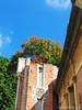 (Gato de petricor) Tags: arquitectura naturaleza architecture nature villasantainés ladrillos edificacion historia pasado past history árbol cieloazul cielo tree