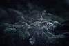 On  A Dark Winter's Day {Lensbaby Sweet 80} (Janet_Broughton) Tags: lensbaby sweet80 forest frost dark moody blur mysterious