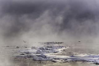 One Gull Arrives, One Gull Leaves (Explored)