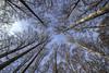 FORESTA DEL CANSIGLIO. IL BOSCO DI FAGGI. (FRANCO600D) Tags: cansiglio forestadelcansiglio faggi bosco bl boscodelcansiglio faggeta canon eos600d sigma franco600d 1218 80 43