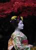 Maiko_20171127_31_2 (Maiko & Geiko) Tags: ryuhonji temple fukuno kyoto maiko 20171127 舞妓 立本寺 ふく乃 京都 宮川町 河よ志 miyagawacho kawayoshi yoshie