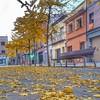 S'acaba la tardor - Autumn is over (Miquel Lleixà Mora [NotPRO]) Tags: tardor otoño fulles groc urban