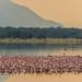 Flamingo Dawn